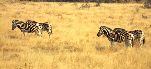 Wycieczki objazdowe RPA